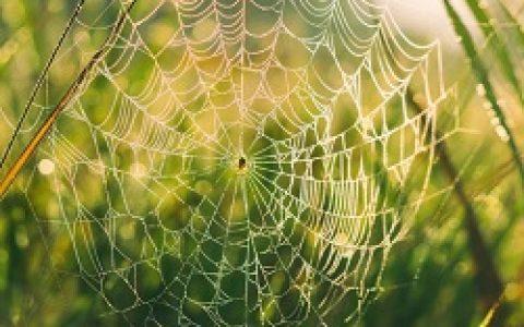 Python爬虫进行Web数据挖掘总结和分析